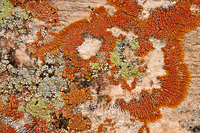 Lichens on Navajo Sandstone McConkie Ranch, Dry Fork Canyon, Utah
