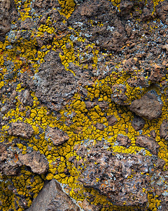 Lichen on volcanic breccia Lava Falls trail, Toroweap, Grand Canyon, Arizona