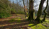 Trees near Loch Long - 11 March 2014