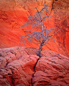 Survival - White Pocket, Vermillion Cliffs NM, Arizona