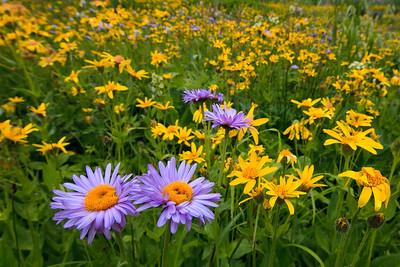 Wildflowers, Upper Blue Lake trail