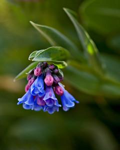 Mt Evans - Tundra flowers