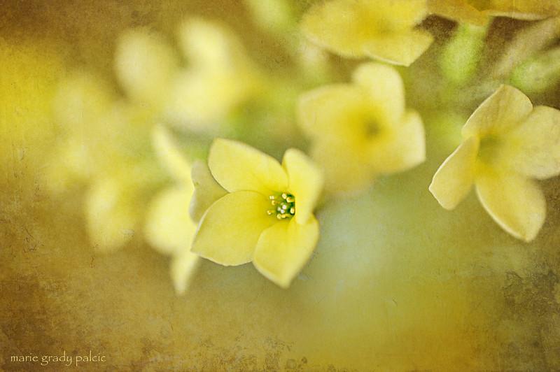 little yellow flowers...