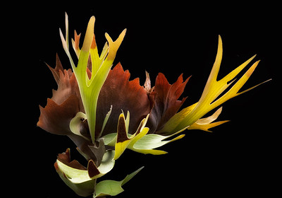 """Staghorn Fern"" (digital photography) by Lucy Aron"
