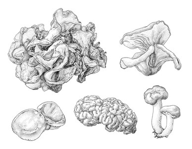 """Jelly Fungi"" (pen & ink on illustration board) by Insil Choi"