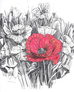 """Poppy Garden"" (ink, marker) by Celia Cortez"
