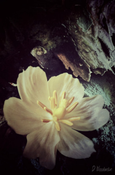 """""""End of May"""" (iPhoneography) by Debra Woodman"""