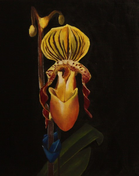 """""""Lady Slipper"""" (oil) by Mary Datum"""