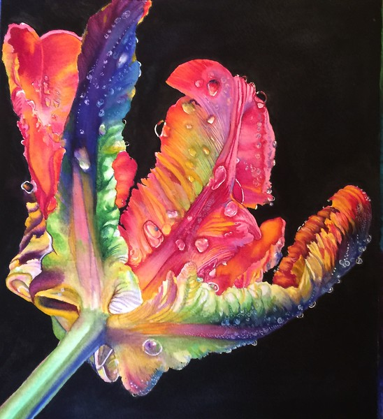 """Rainbow Dew"" (watercolor) by Catherine Martinez-Perez"