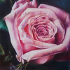 """Looking Down at a Rose"" (colored pencil) by Nathalie Beck"