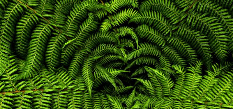 """Leaf Study 5, Royal Botanic Garden, Edinburgh Scotland"" (photography) by Wayne Peterson"