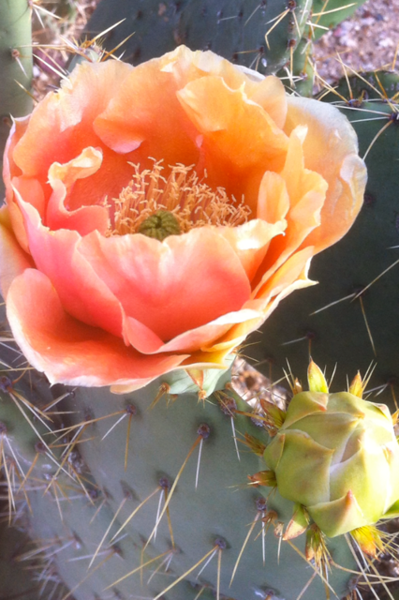 """""""Desert Salmon"""" (photography) by Sherry Lupo"""