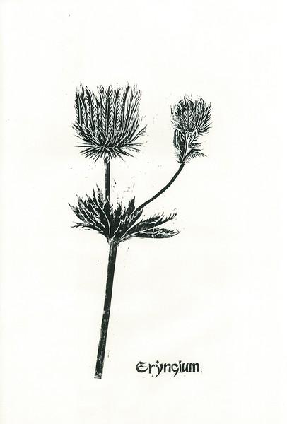 """Eryngium"" (linocut) by Inna Kashina"