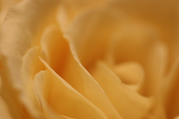 """Soft"" (digital photography) by Kathy Brady"