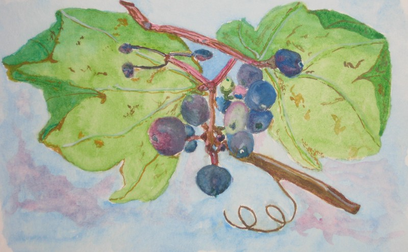 """""""Withering Grapes"""" (watercolor) by Susan Heed-Myers"""