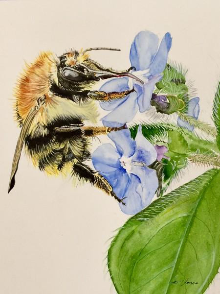 """The Collector"" (watercolor) by Sonja Jones"