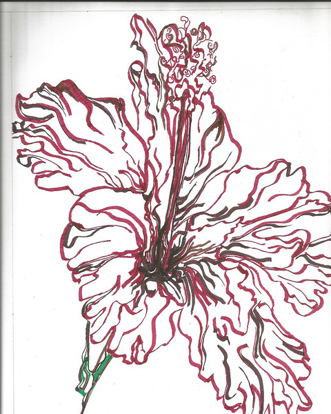 """Red Hybiscus"" (ink) by Linda Jorda"