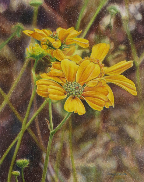 """""""Desert Flowers"""" (colored pencil) by Caryn Coville"""