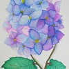 """Spring Hydrangea"" (watercolor) by Susan Heed-Myers"