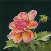 """Blossoming Melody"" (colored pencil) by Caryn Coville"