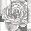 """A Rose is a Rose"" (graphite) by Linda Jorda"