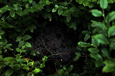 """Forest Galaxy - Spider web"" (photography) by Sofia Kononova"