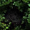 """Forest Galaxy - Spider web"" (photography) by Sofia Kononova"