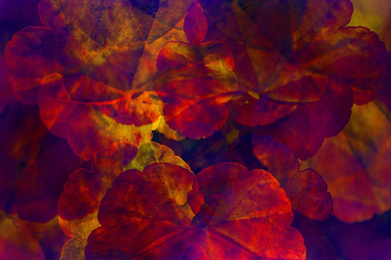 """Autumn Leaves"" (mixed media) by Romi Maegli"