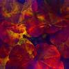 """Autumn Leaves"" (mixed media) by Romi Maegli"