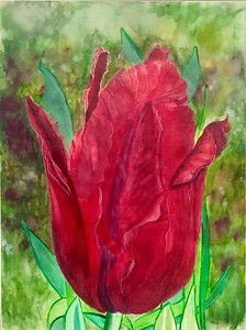 """Tulip Roja""(watercolor and ink wash) by Mateo Balara"