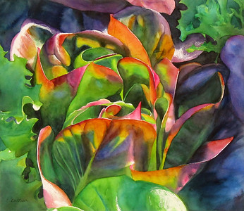 """Red Lettuce"" (watercolor) by Elizabeth Burin"