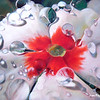 """Vinca Drops"" (oil) by Diane Morgan"