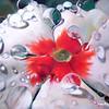 """Vinca Drops"" (oil) by Diane Morgan"