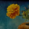 """The Yellow Marigold"" (oil on canvas board) by Louis Degni"