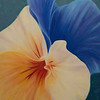 """Pansy Hug"" (oil) by Sarah Hansen"