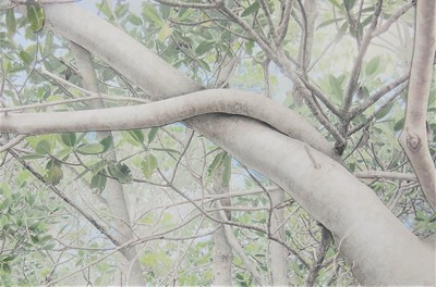 """Banyan Branch 100"" (collage with photos, graphite, overlays) by Deborah Perlman"