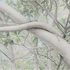 """Banyan Branch 100"" (collage with photos, graphite, overlays) by Deborah Perlman"