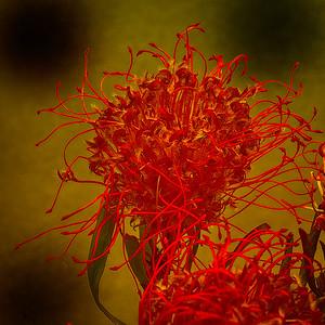 """Flowers 2-14-13b"" (photography) by Alan Gaynor"