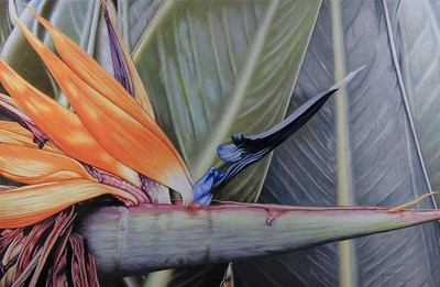 """""""Bird of Paradise"""" (colored pencil) by John Guiseppi"""