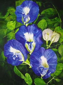 """""""Blue Butterfly Pea"""" (watercolor) byJerson Antao"""