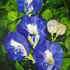 """Blue Butterfly Pea"" (watercolor) by	Jerson Antao"