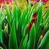 """Black Iris"" (photography) by Belle Koblentz"