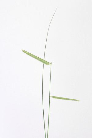 """Undecided"" (photography) by John Goddard"