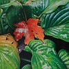 """Clash of The Seasons"" (colored pencil) by Pamela Clements"