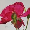 """""""Rose Series #9"""" (watercolor) by Lisa Freeman-Wood"""