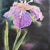 """Iris after rain"" (watercolor) by Xinglu Cao"