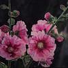 """""""Rosy makeup"""" (watercolor) by Jingyu Yang"""