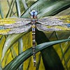 """""""Dragonfly"""" (oil) by Antonina Polikanina"""