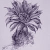 """""""Cactus bloom"""" (pen and ink) by Xue Xu"""