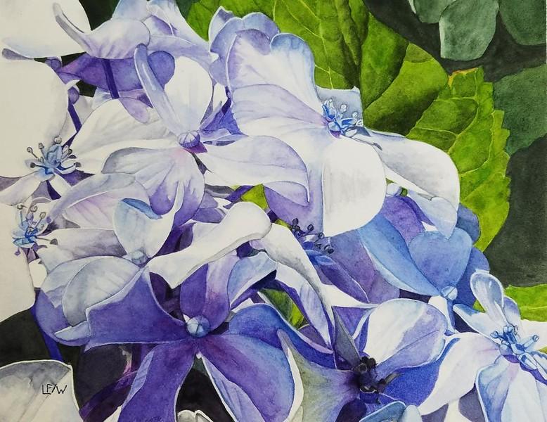 """""""Heavenly Blue"""" (watercolor) by Lisa Freeman-Wood"""
